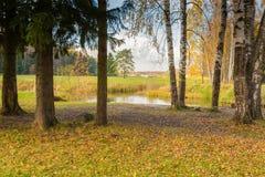 Paisaje brillante del otoño fotos de archivo libres de regalías