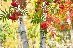 Paisaje brillante del otoño Foto de archivo libre de regalías