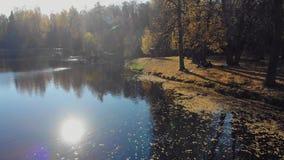 Paisaje brillante del otoño Bosque septentrional en las orillas de un lago pintoresco almacen de video