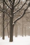 Paisaje brumoso de los árboles del invierno fotografía de archivo libre de regalías