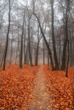 Paisaje brumoso del otoño Imagenes de archivo
