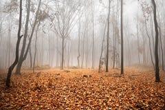 Paisaje brumoso del otoño Fotografía de archivo