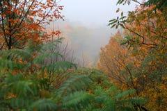 Paisaje brumoso en tiempo del otoño imágenes de archivo libres de regalías