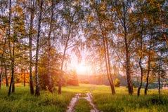 Paisaje caliente de la mañana árboles y hojas de abedul que enguantan en sunlig Imagenes de archivo