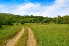 Paisaje, camino de tierra y plantaciones verdes Imagen de archivo libre de regalías