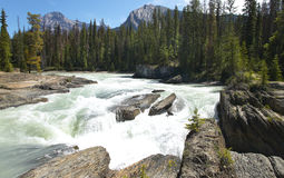 Paisaje canadiense con Columbia Británica del río y del bosque Cana imagenes de archivo