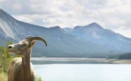 Paisaje canadiense con la cabra de montaña en Alberta canadá imágenes de archivo libres de regalías