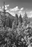 Paisaje canadiense con la ruta verde de Icefields del bosque alberta Cana Fotografía de archivo libre de regalías