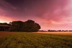 Paisaje checo con los campos del verde y del oro, los árboles grandes y un puente de la carretera entre los pueblos Brozany nad O Fotografía de archivo
