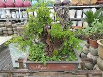 Paisaje chino del jardín Fotos de archivo