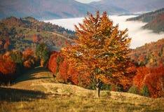 Paisaje colorido de los árboles y de los campos de las montañas del otoño imágenes de archivo libres de regalías