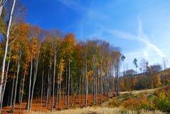 Paisaje colorido del bosque del otoño Imagen de archivo libre de regalías