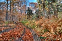 Paisaje colorido del otoño Fotografía de archivo