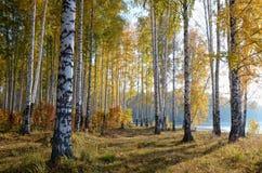 Paisaje colorido del otoño Imágenes de archivo libres de regalías