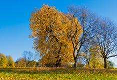 Paisaje colorido del otoño Fotografía de archivo libre de regalías