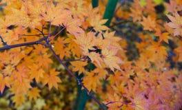 Paisaje colorido del otoño Foto de archivo libre de regalías
