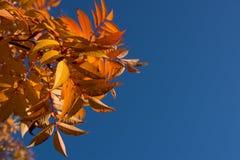 Paisaje colorido del otoño Imagen de archivo libre de regalías