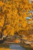 Paisaje colorido del otoño Imagenes de archivo