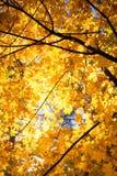 Paisaje colorido del otoño - el amarillo deja el fondo Copie el espacio fotografía de archivo libre de regalías