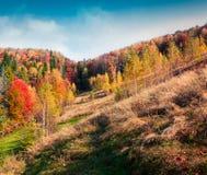 Paisaje colorido del otoño en las montañas cárpatas Imágenes de archivo libres de regalías
