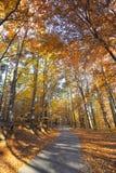 Paisaje colorido del otoño en montaña Fotografía de archivo libre de regalías