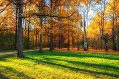 Paisaje colorido del otoño en parque Imagen de archivo