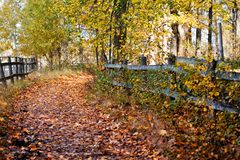 Paisaje colorido del otoño Imagen de archivo