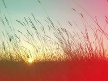 Paisaje colorido del verano Imagen de archivo libre de regalías