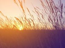 Paisaje colorido del verano Fotos de archivo