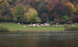 Paisaje colorido s azul de la primavera del prado de la vaca del llano del río de la montaña Imagen de archivo
