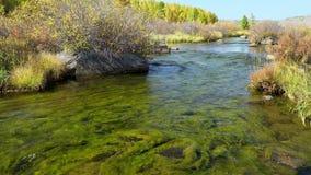 Paisaje con alga marina en el río de la montaña almacen de metraje de vídeo