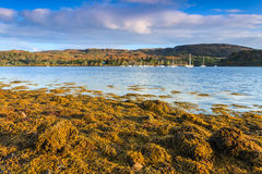 Paisaje con alga marina en las rocas en la salida del sol Imagen de archivo