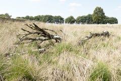 Paisaje con el árbol de abedul muerto Imágenes de archivo libres de regalías