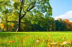 Paisaje con el árbol de arce de hojas caducas del otoño en parque soleado del otoño - paisaje del otoño del otoño de la naturalez Fotografía de archivo