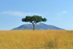 Paisaje con el árbol en África Imagen de archivo libre de regalías