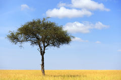 Paisaje con el árbol en África Fotografía de archivo