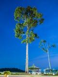 Paisaje con el árbol en la noche Foto de archivo