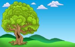 Paisaje con el árbol frondoso grande Foto de archivo