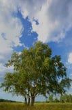 Paisaje con el árbol y el cielo azul Imágenes de archivo libres de regalías
