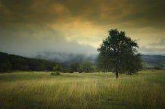 Paisaje con el árbol y el cielo dramático Fotografía de archivo libre de regalías