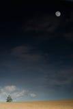 Paisaje con el árbol y la luna Imagen de archivo