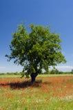 Paisaje con el árbol y los poppyes Foto de archivo libre de regalías