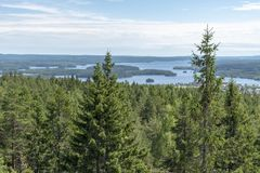 Paisaje con el bosque y el lago en Suecia fotos de archivo libres de regalías