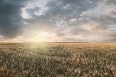 Paisaje con el campo del trigo imagen de archivo libre de regalías