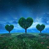 Paisaje con el campo y los árboles en la forma del corazón Imágenes de archivo libres de regalías