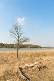 Paisaje con el lago Foto de archivo libre de regalías
