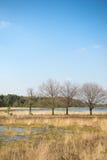Paisaje con el lago Imagen de archivo libre de regalías