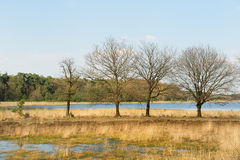 Paisaje con el lago Fotos de archivo libres de regalías