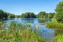 Paisaje con el lago del bosque Imagen de archivo libre de regalías