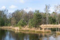 Paisaje con el lago y el bosque Fotos de archivo libres de regalías